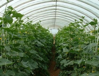 园艺植物温室