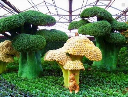 园艺小温室