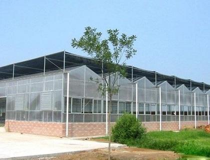 阳光板温室III