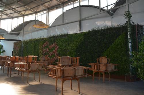 植物墙价格