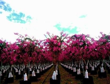萍乡花卉苗木展示