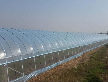 萍乡大跨度拱棚建设