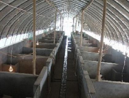 水畜养殖棚