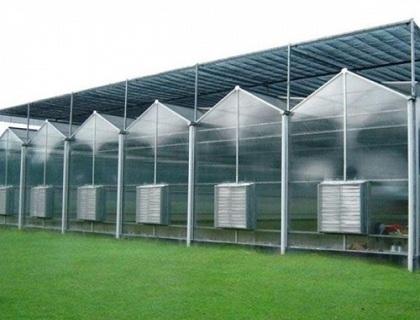 阳光板温室II