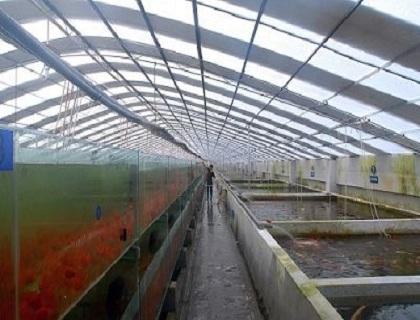水产养殖室