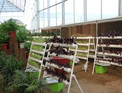 无土栽培植物