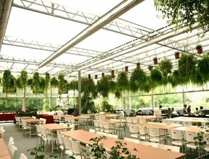 温室内景观