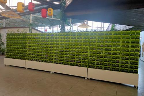 江西植物墙厂家
