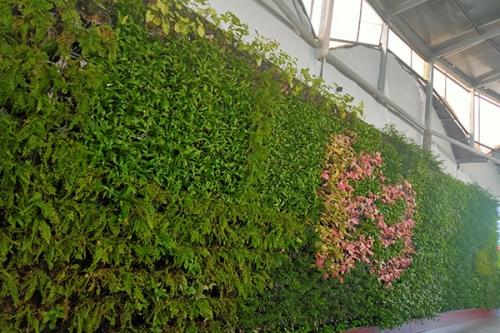 优质植物墙厂家
