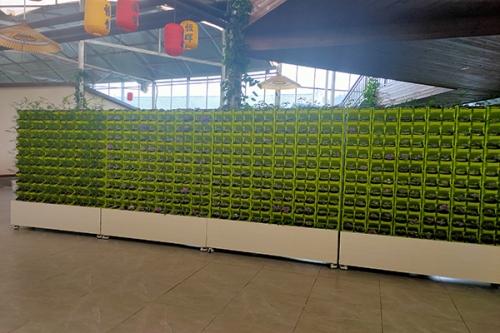 江西植物墙